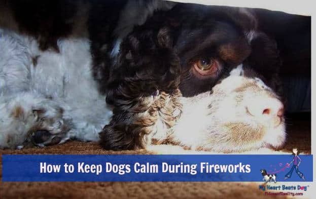 Keep dog calm from fireworks