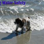Dog Water Dangers No One Talks About