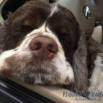 How to Go on Road Trips With a Dog