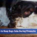How to Keep Dogs Calm During Fireworks