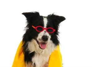 25 Things to Do With Your Dog in Summer Weather