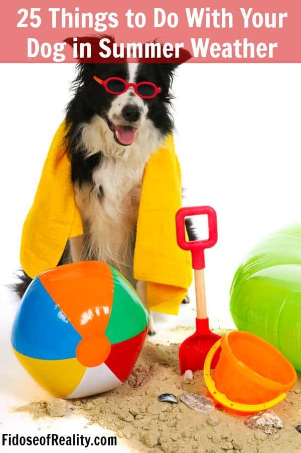 Summer dog activities