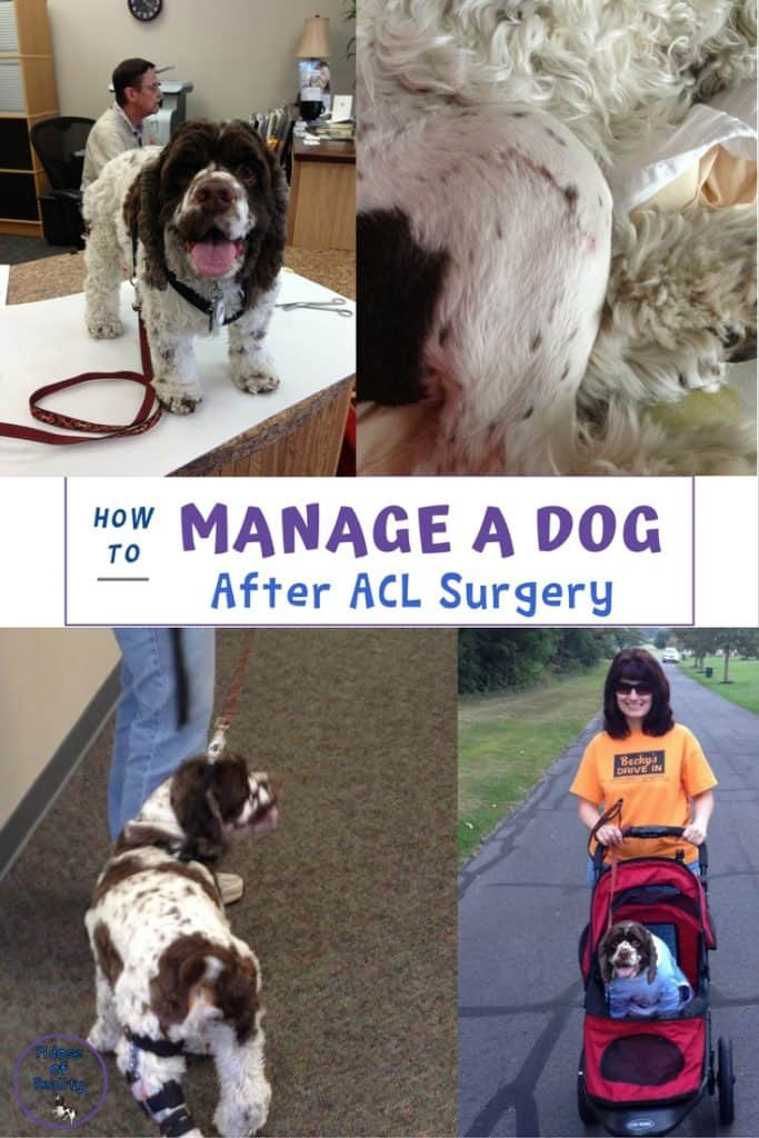 How to help your dog after ACL surgery