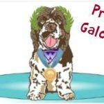 Summer Games Dog Photo Contest