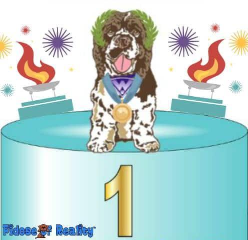 Summer Games Dog Photo Contest.