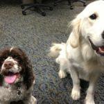 Should I Give My Dog Probiotics?