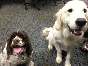 probiotics dogs (2)