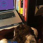 Stop CyberBullying My Dog Online