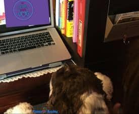 Stop CyberBullying My Dog Online
