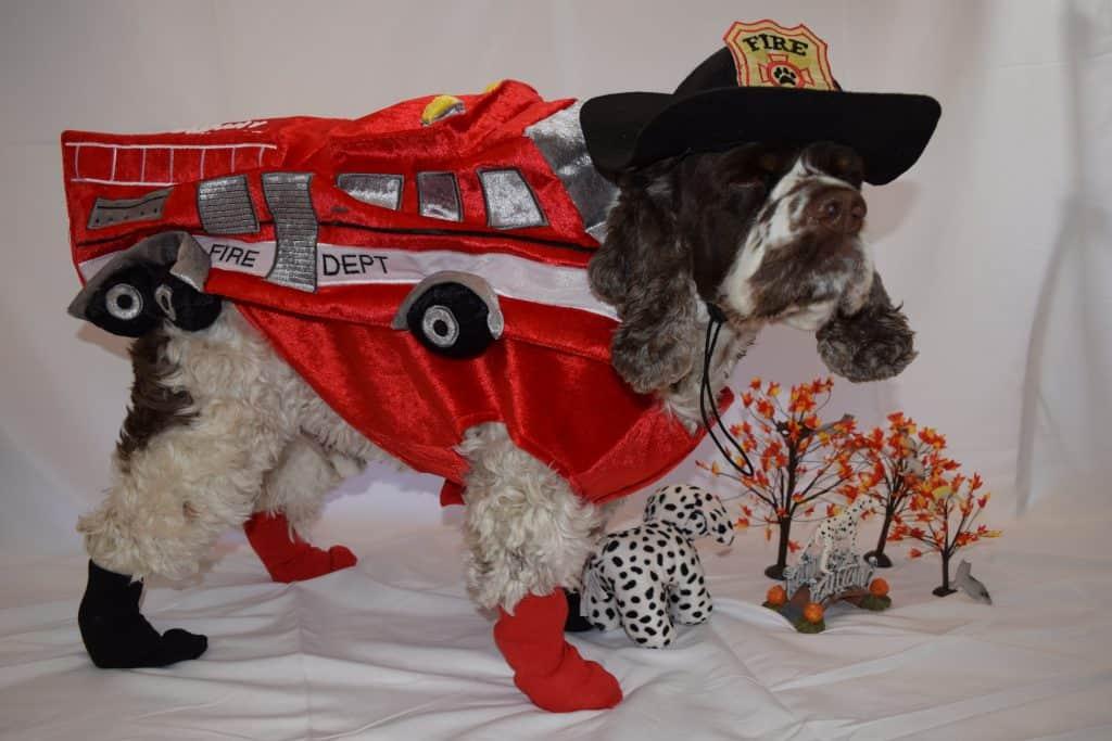 fire truck dog