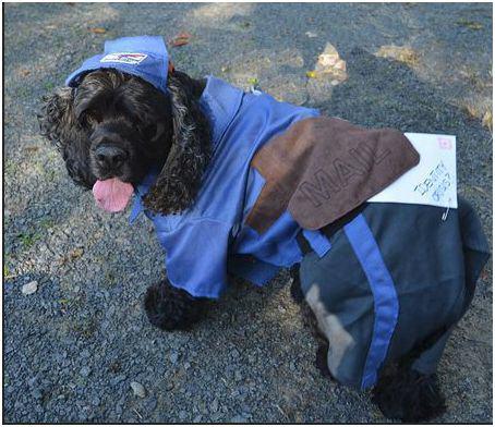 Dog mailman