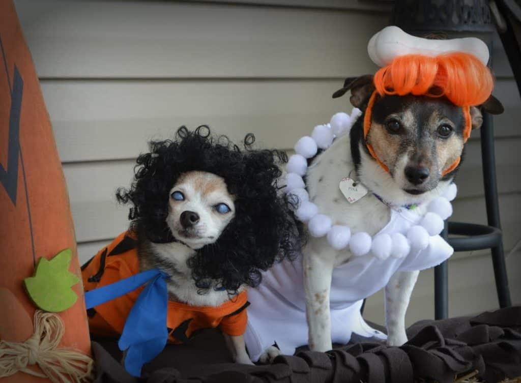 Dogs as the Flintstones