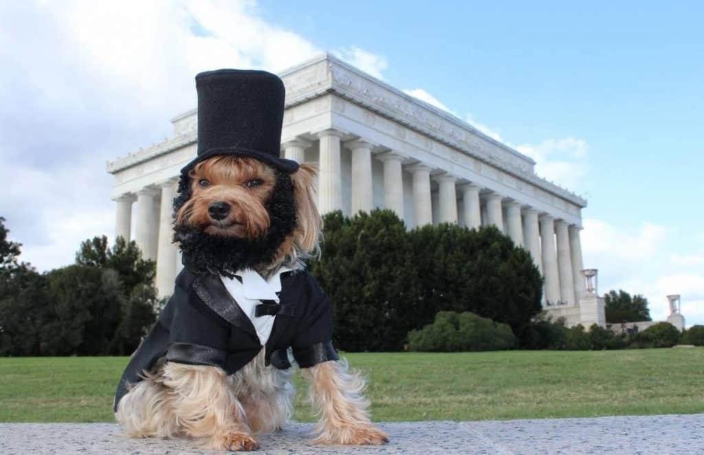 Abe Lincoln dog Halloween