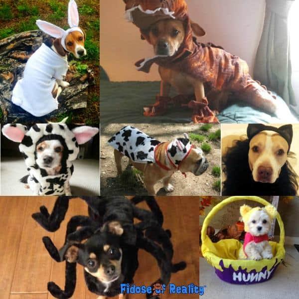 Funny dog halloween costumes