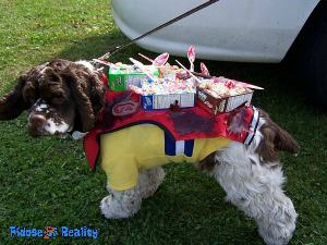 100 halloween costume ideas for dogs