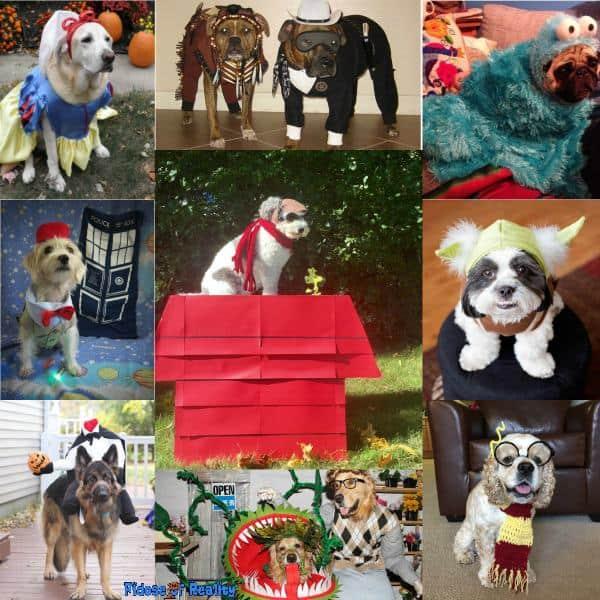 Original dog halloween costumes