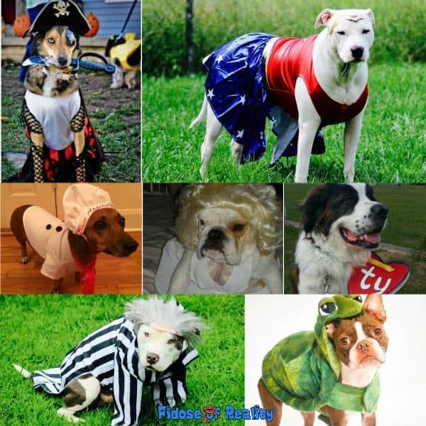 Classic dog halloween costumes