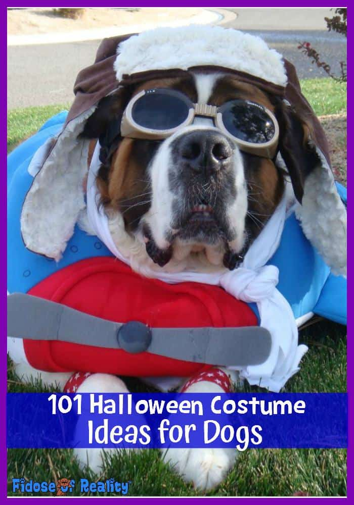 dog halloween costume ideas - 100 Best Halloween Costumes