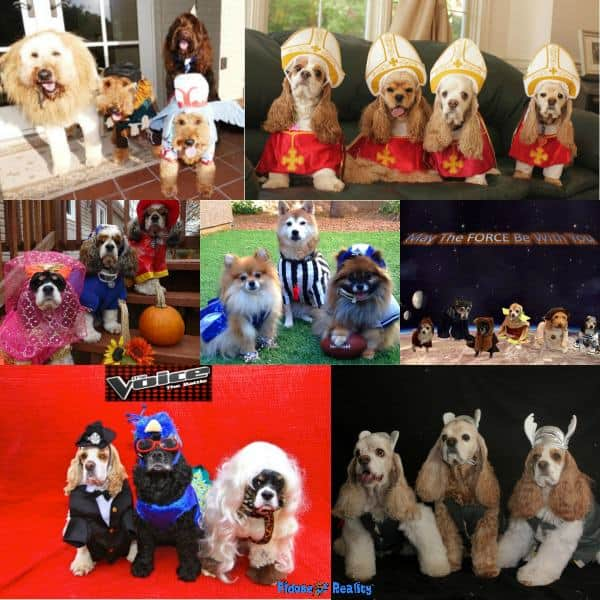 Halloween dog costumes for a group
