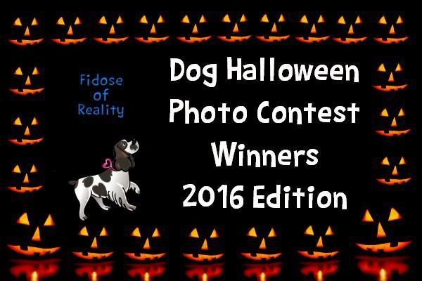 Dog Halloween photo contest winners