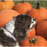 The Bewitching Powers and Dangers of Pumpkin for Dogs