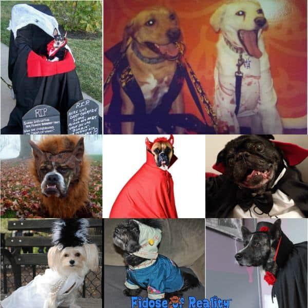 Horror dog halloween costumes