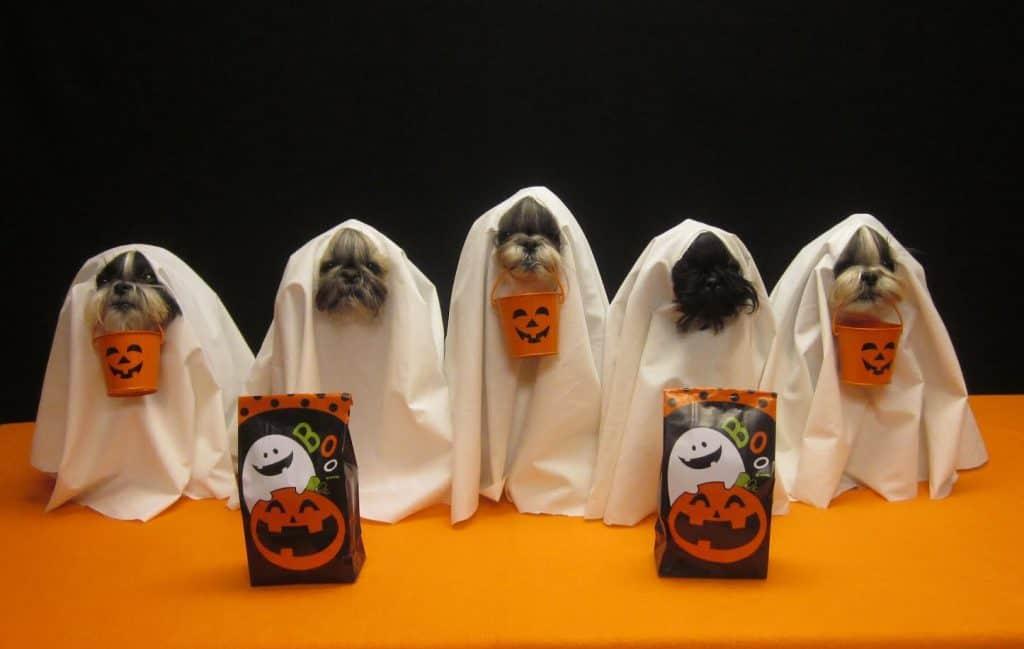 dog ghosts