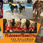 Dog Halloween Photo Contest 2016 Edition