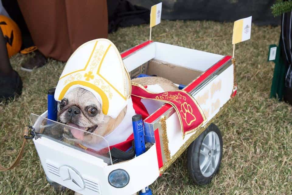 Pug as pope