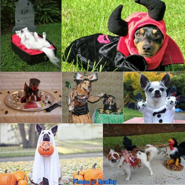 Scary dog Halloween costumes