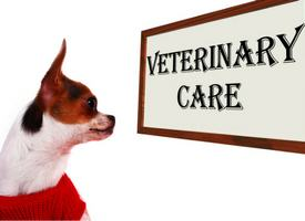 Could Your Dog's Hormones Be Out of Whack?