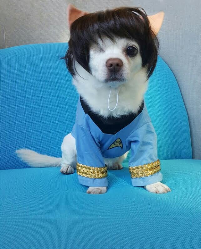 Dog as Spock