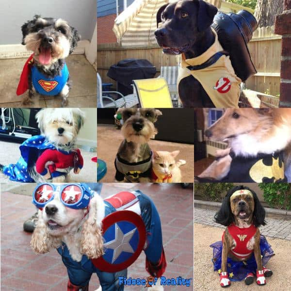 Super hero dog halloween costumes