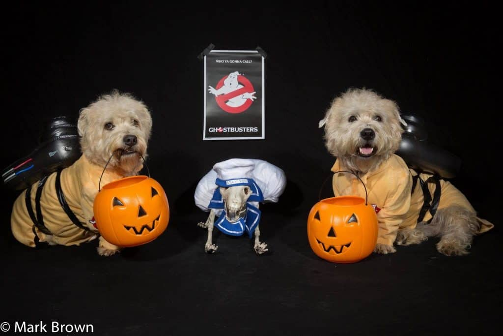 Dogs as Ghostbusters
