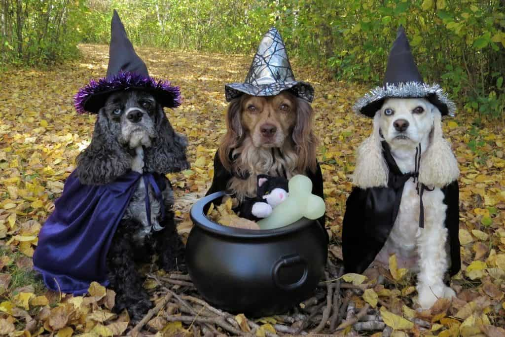 Dogs dressed as witches