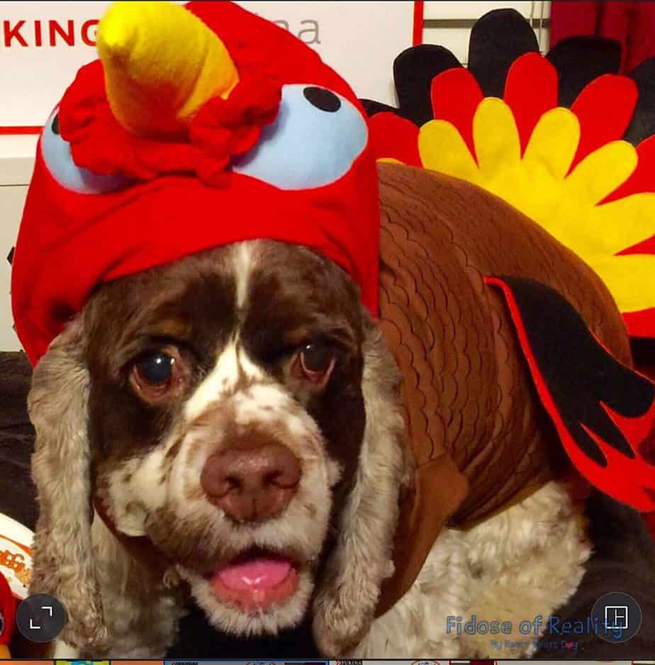 Can my dog eat turkey