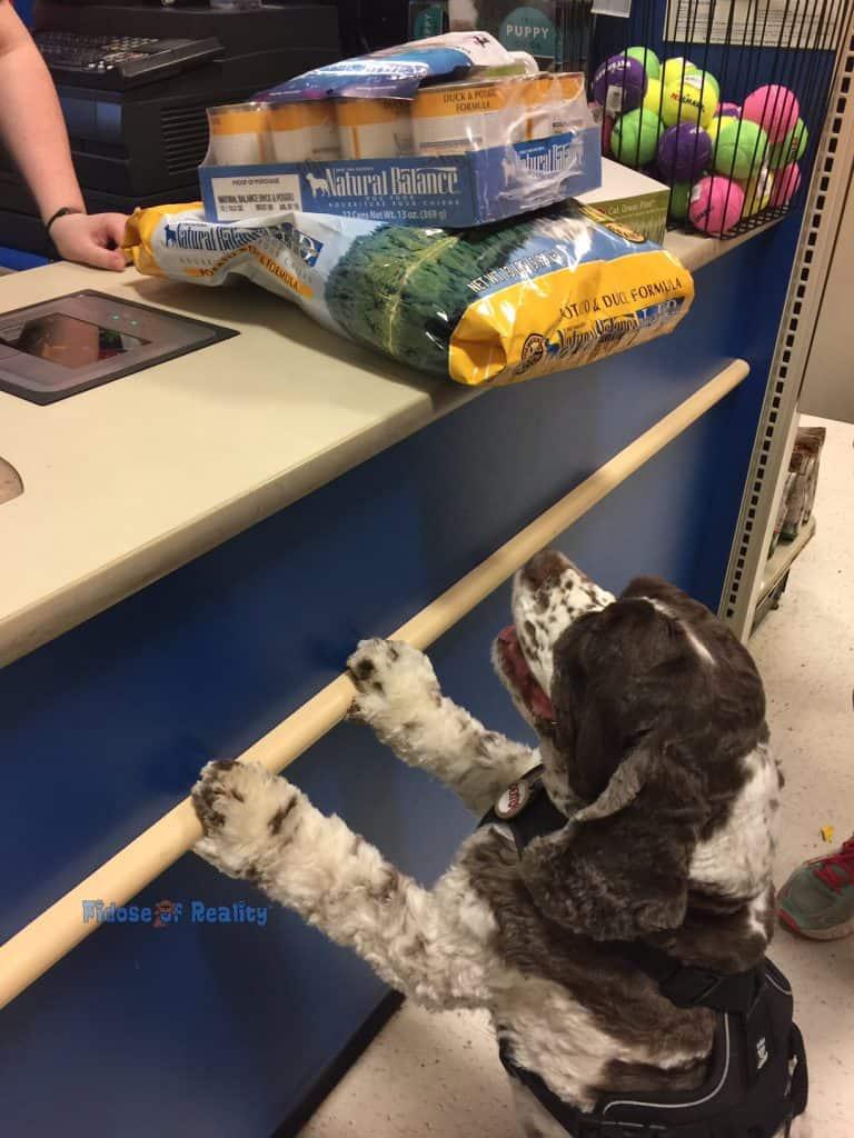 Natural Balance dog food selection