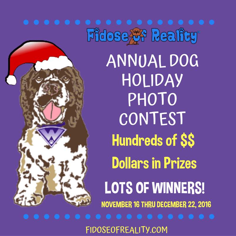 Dex The Halls 2016 Dog Holiday Photo Contest