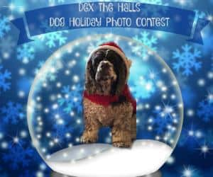 Dex The Halls 2016 Dog Holiday Photo Contest