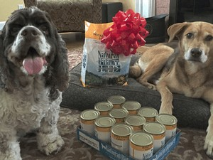 How to Determine the Quality of Dog Food #WeBelieveinNB