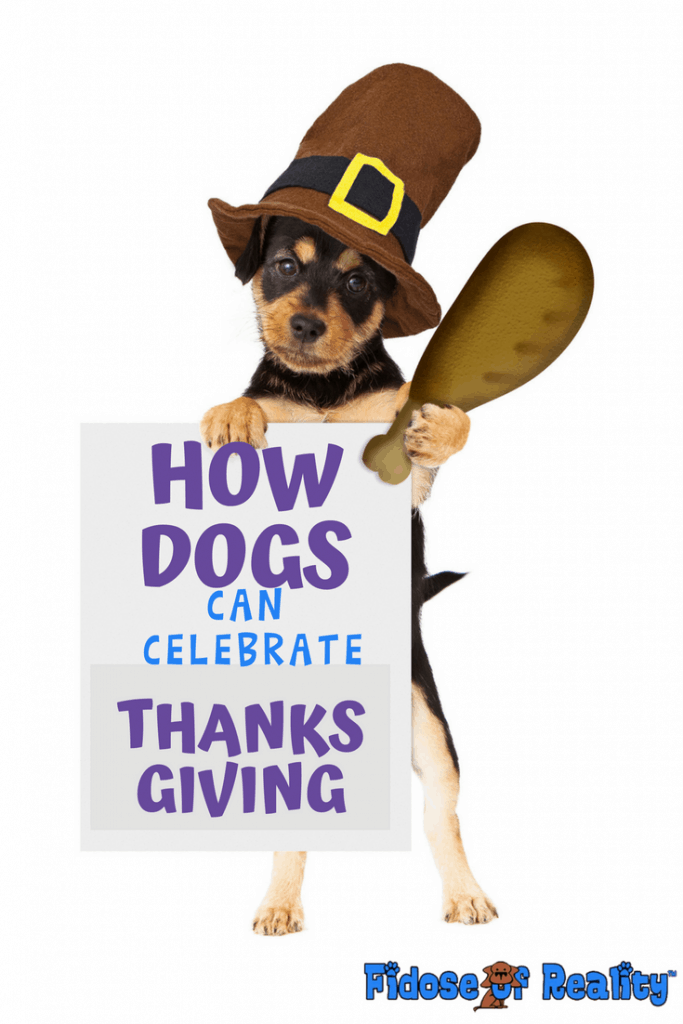 How dogs can celebrate Thanksgiving is all up to you