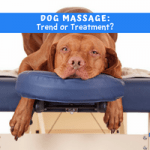Dog Massage: Trend or Treatment