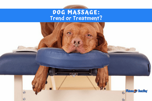 Dog Massage: Trend or Treatment