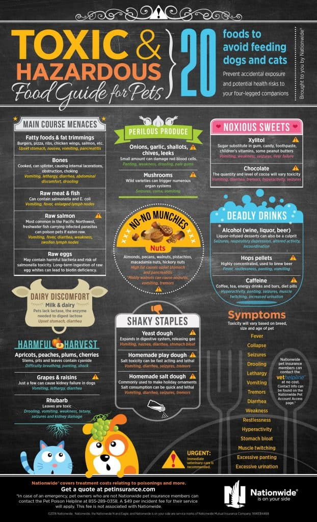 Dog Food Infographic