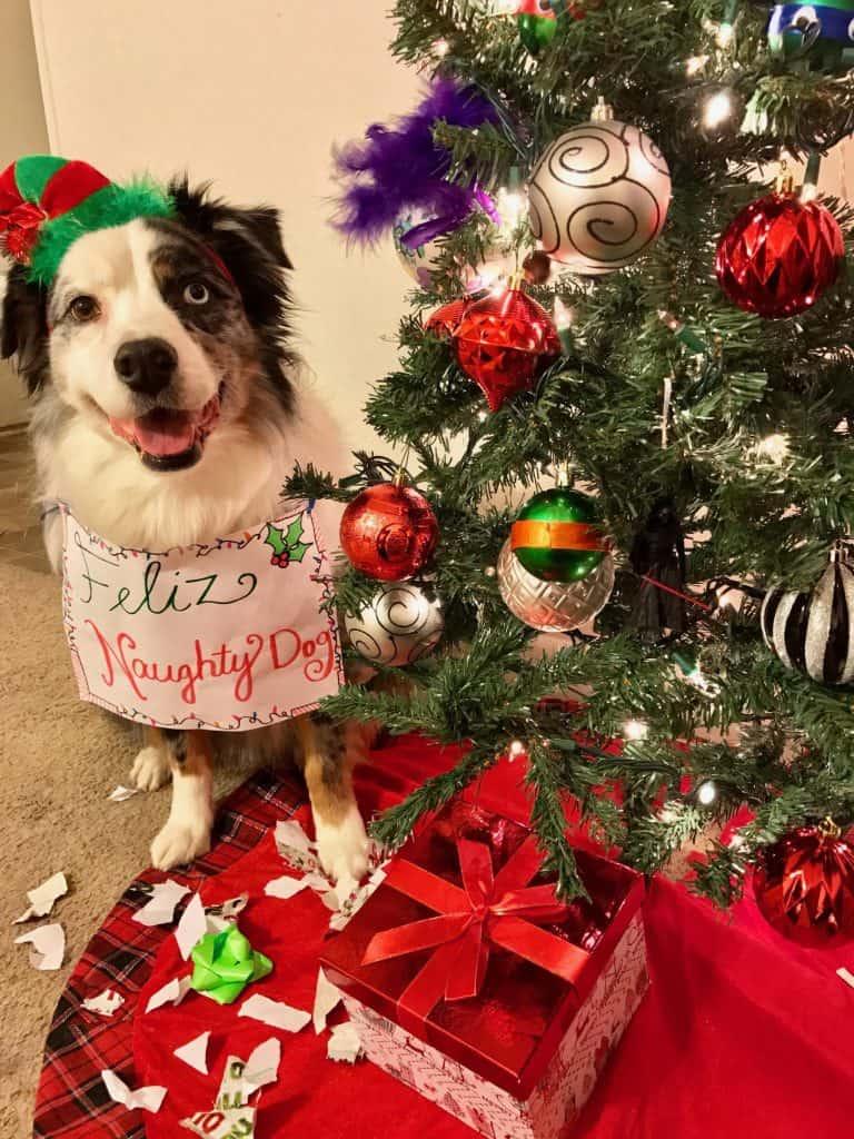 Naughty dog for Christmas