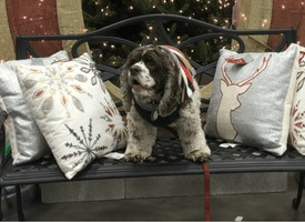 Five Biggest Surprising Holiday Dangers to Dogs