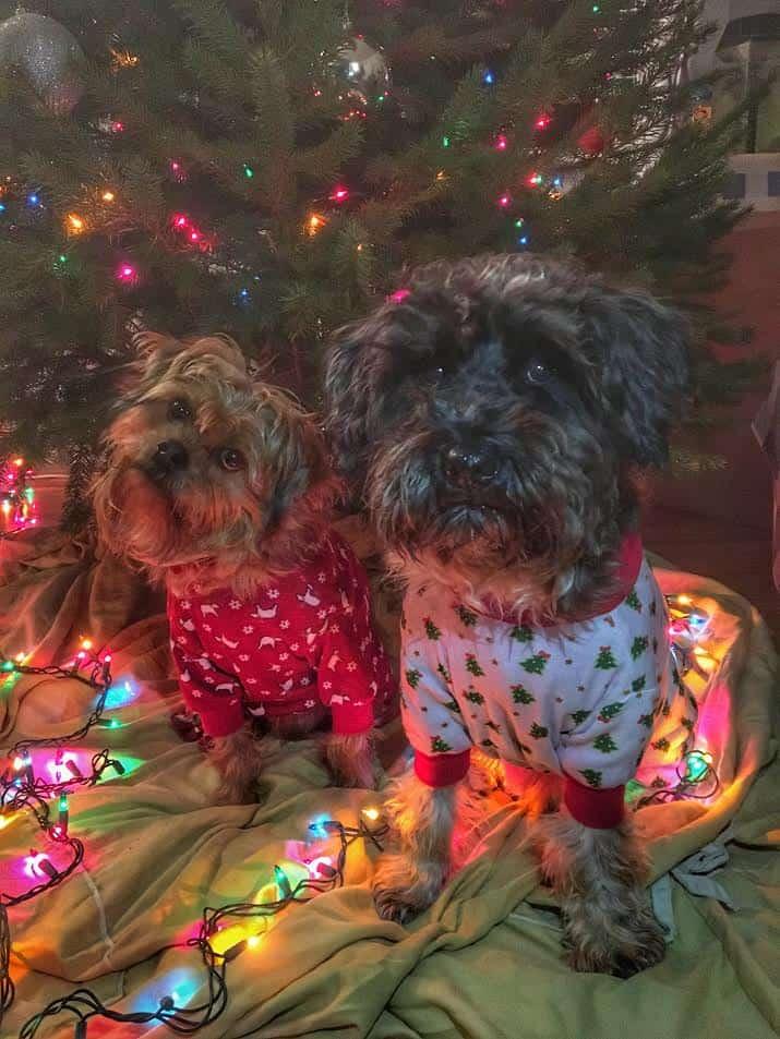 Christmas dogs in pajamas