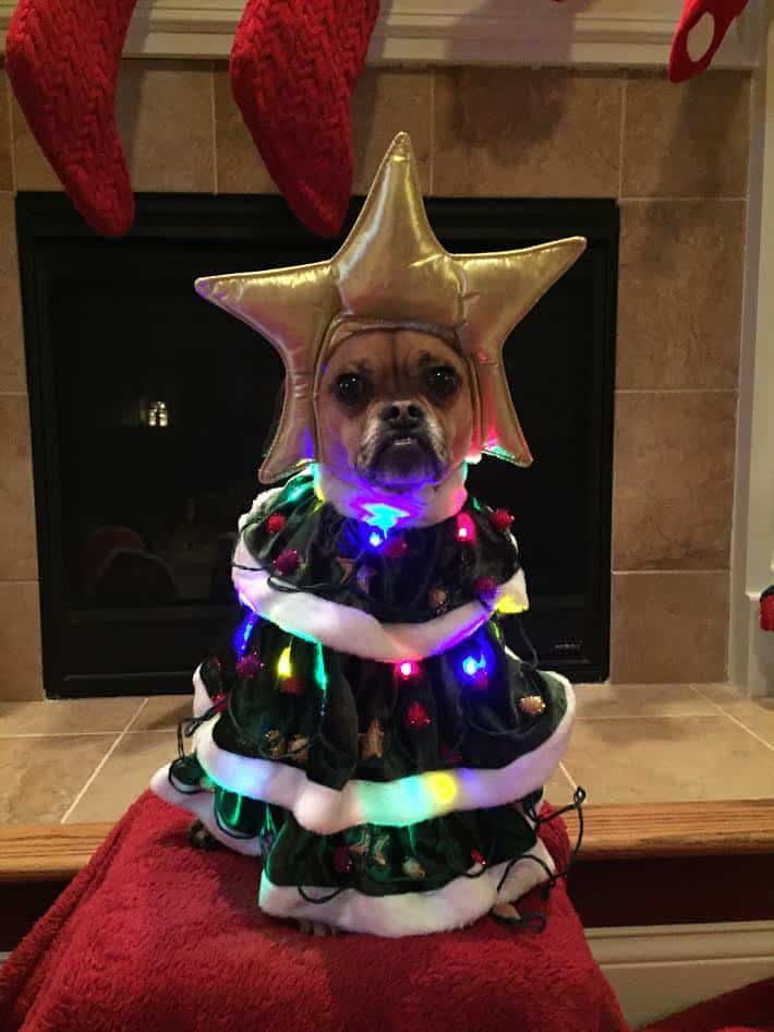 Dog as a Christmas tree
