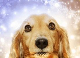 8 Ways to Prevent Your Dog From Hating the Holidays