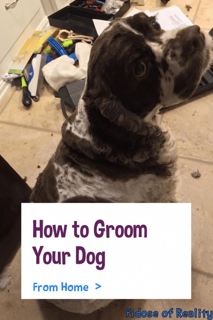 online dog grooming courses | Happy Dog Groomers eAcademy